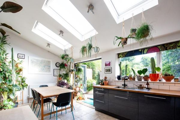 The essential beginners guide to an indoor garden paradise