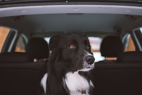 Canine capacity rating: Is your car paw-fect for your pooch?